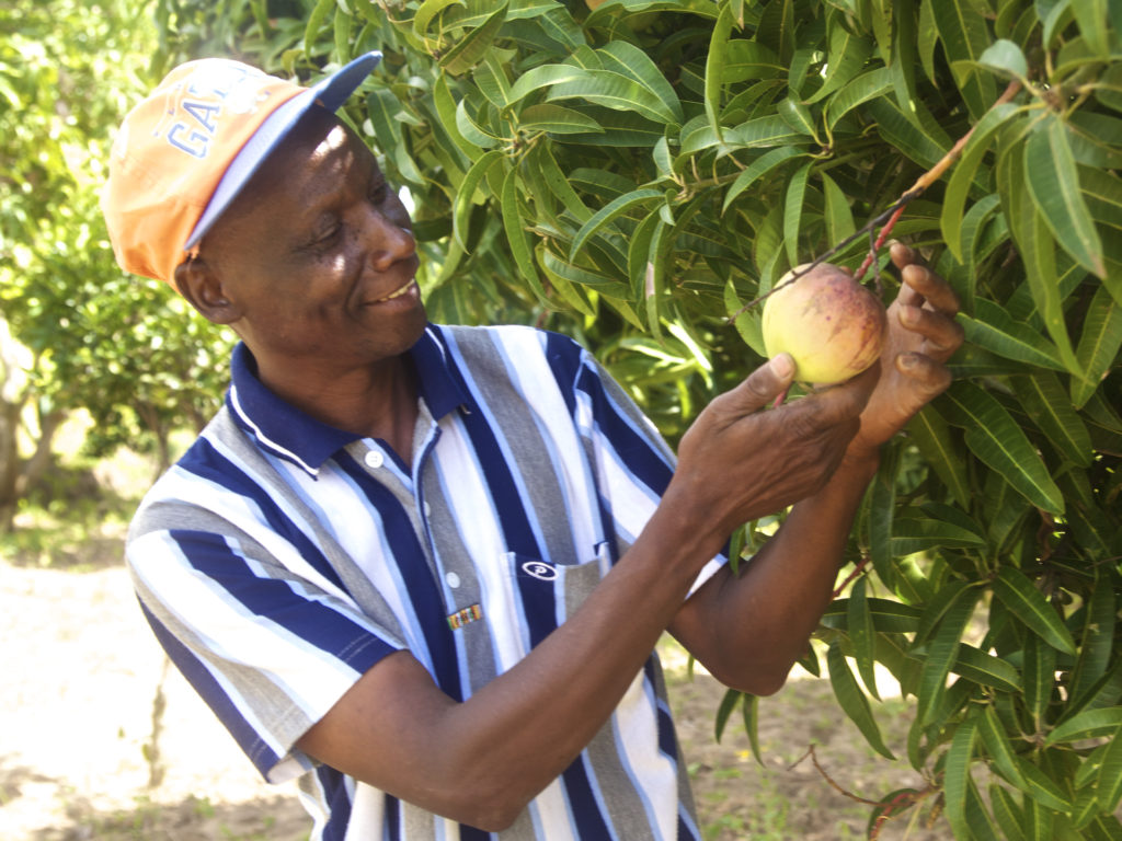 Opportunities for financing the mango value chain: A case study of lower eastern Kenya