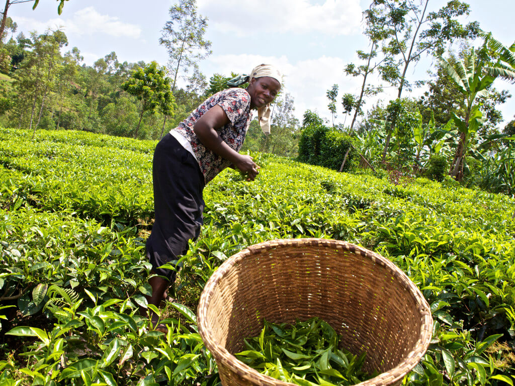 Agricultural value chain financing in Kenya: Assessment of potential opportunities for growth